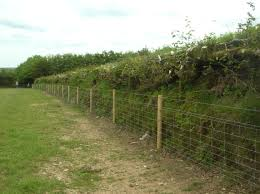 Hedgerow and Boundary Grants 2016