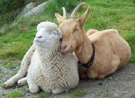Cross Compliance: Sheep and Goat Inventories